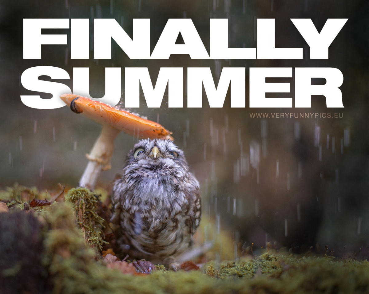 funny-pictures-finally-summer